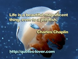 Life is a beautiful magnificent thing  even to a jellyfish
