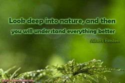 Albert Einstein Look deep into nature, and then you will understand everything better