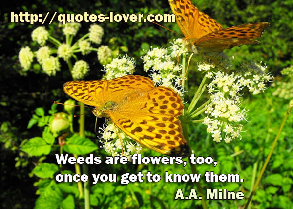 Weeds are flowers, too, once you get to know them.