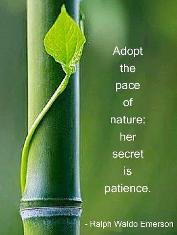 Adopt the pace of nature - her secret is patience.