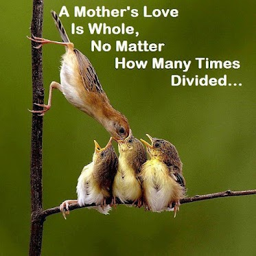 A mother's love is whole, no matter how many times divided