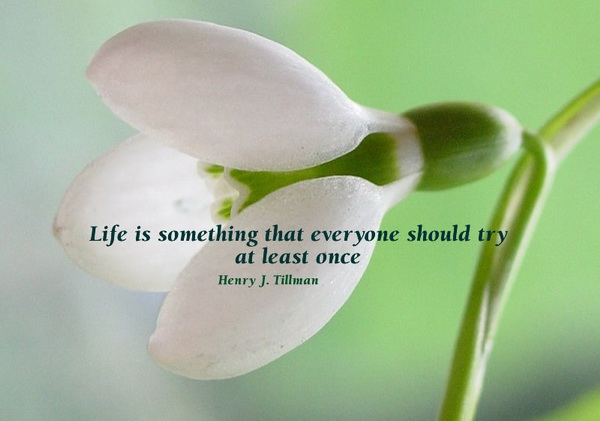Life is something that everyone should try at least once