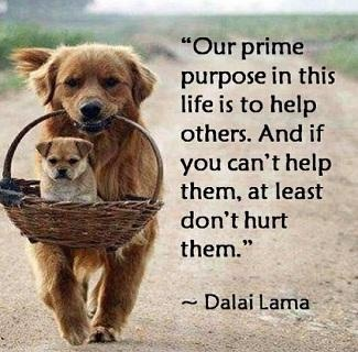 Our prime purpose in this life is to help others. And if you can't help, at least don't hurt them