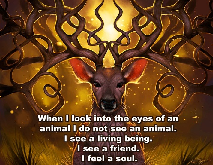 When I look into the eyes of an animal I do not see an animal I see a living being. I see a friend. I feel a soul.