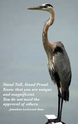 Stand Tall, Stand Proud know that you are unique and magnificent. You dont need the approval of others